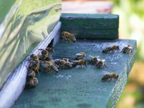 Natural Honey Bees