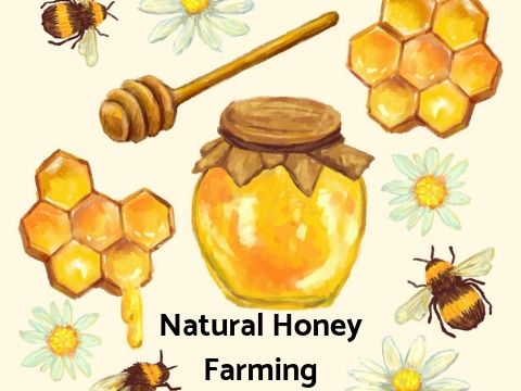 Natural Honey Farming