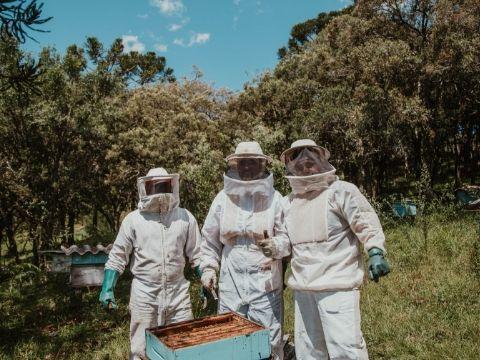 Natural Honey Harvesting